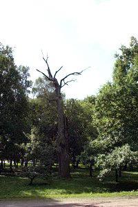 Стоит в старом парке древнее дерево - твердым знаком.