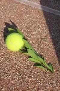 Теннис - королевский вид спорта